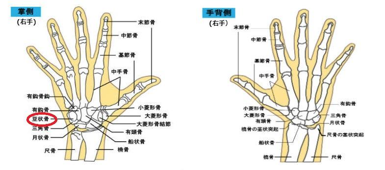 手の骨 鍼灸マッサージ